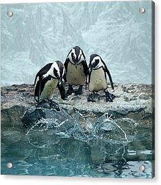 Penguins Acrylic Print by Fotografias de Rodolfo Velasco