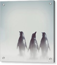 Penguins In The Mist Acrylic Print by Wim Lanclus