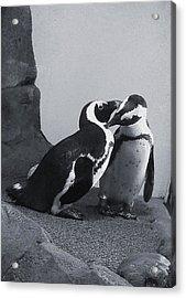 Penguins Acrylic Print