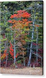 Pennsylvania Laurel Highlands Autumn Acrylic Print by John Stephens