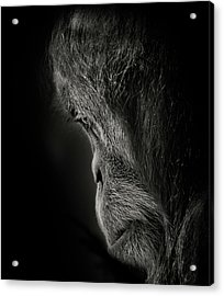Pensive Acrylic Print by Animus Photography