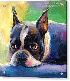 Pensive Boston Terrier Painting By Acrylic Print