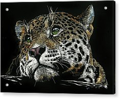 Pensive Leopard Acrylic Print