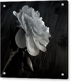 Acrylic Print featuring the photograph Peonie by Sharon Jones