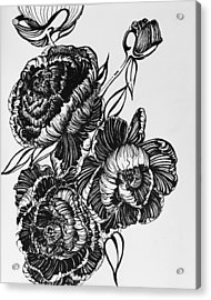 Peonies Line Drawing Acrylic Print