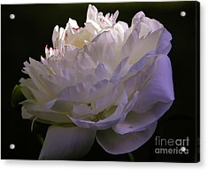 Peony At Eventide Acrylic Print by Marilyn Carlyle Greiner
