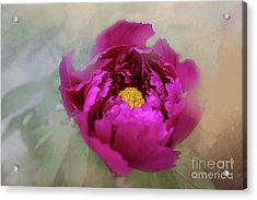Acrylic Print featuring the photograph Peony by Eva Lechner