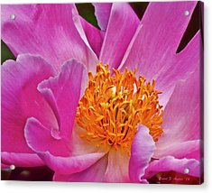 Pink Flower Peony Garden Wall Art Acrylic Print