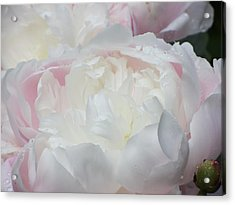 Acrylic Print featuring the photograph Peony by Karen Shackles