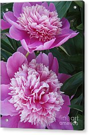 Acrylic Print featuring the photograph Peony by Kristine Nora