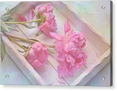 Peonies In White Box Acrylic Print by Diane Alexander
