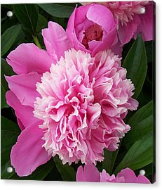 Peony With Ant Acrylic Print by Ellen B Pate