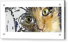 Pepper Eyes Acrylic Print by Deborah Nakano