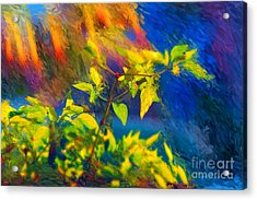 Pepper Plant II Acrylic Print