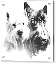 Acrylic Print featuring the digital art Pepsi And Max by Charmaine Zoe
