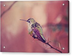 Perch Acrylic Print by Laurie Search