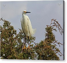 Acrylic Print featuring the photograph Perch by Robert Pilkington
