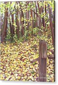 Percy Warner Trees Acrylic Print