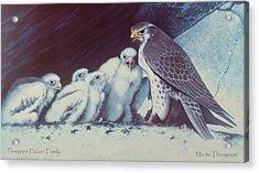 Peregrine Falcon Family Acrylic Print by Marte Thompson