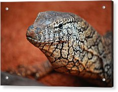 Perentie Monitor Lizard Color Acrylic Print by Michelle Wrighton