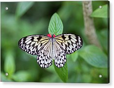 Acrylic Print featuring the photograph Perfect Butterfly Pose by Raphael Lopez