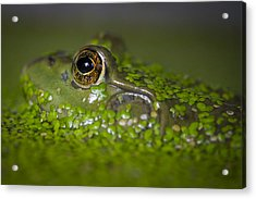 Perfect Camouflaging Acrylic Print