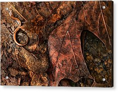 Perfect Disguise Acrylic Print