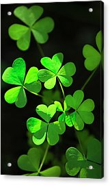 Perfect Green Shamrock Clovers Acrylic Print