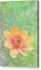 Perfect Peach Acrylic Print by JQ Licensing