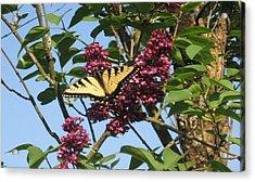 Yellow Swallowtail And Lilac Acrylic Print