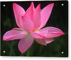 Acrylic Print featuring the photograph Perfection by Elvira Butler