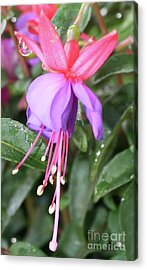 Perfection In Nature Acrylic Print by Tbone Oliver