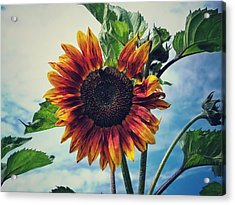 Perfectly Imperfect Acrylic Print