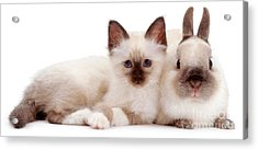 Perfectly Paired Pals Acrylic Print