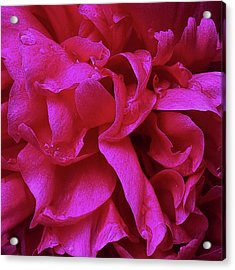 Perfectly Pink Peony Petals Acrylic Print