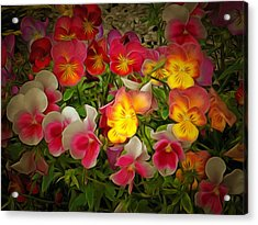 Radiance Pansies Acrylic Print by Dorothy Berry-Lound
