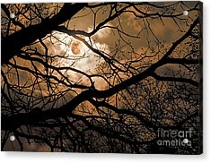 Perigee Moon In The Trees Acrylic Print by Tamyra Ayles