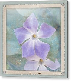 Periwinkle Stars Acrylic Print by Cindy Garber Iverson