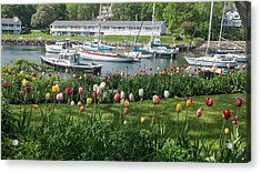 Perkins Cove Tulips Acrylic Print by Joseph Smith