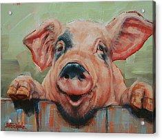 Perky Pig Acrylic Print