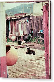 Acrylic Print featuring the photograph Perro On The Patio by Charles McKelroy