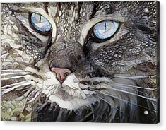 Perry The Persian Cat Acrylic Print