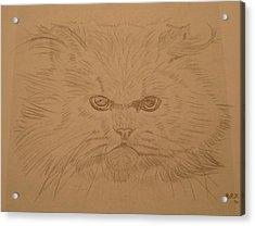 Persian Cat 4 Acrylic Print by Bo Klinge