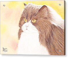 Persian Kitty Acrylic Print