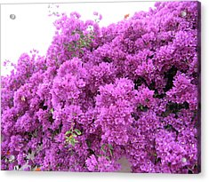 Peruvian Blooms Acrylic Print
