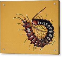 Peruvian Centipede Acrylic Print by Jude Labuszewski