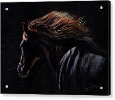 Peruvian Paso Horse Acrylic Print by David Stribbling