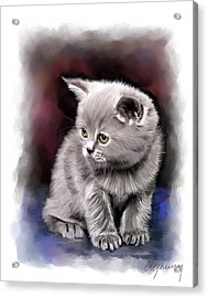 Pet Cat Portrait Acrylic Print by Michael Greenaway
