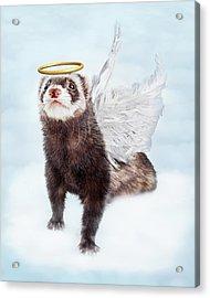 Pet Ferret Angel In Clouds Acrylic Print