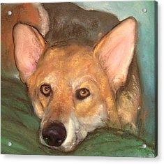 Pet Portrait Acrylic Print by Darla Joy  Johnson